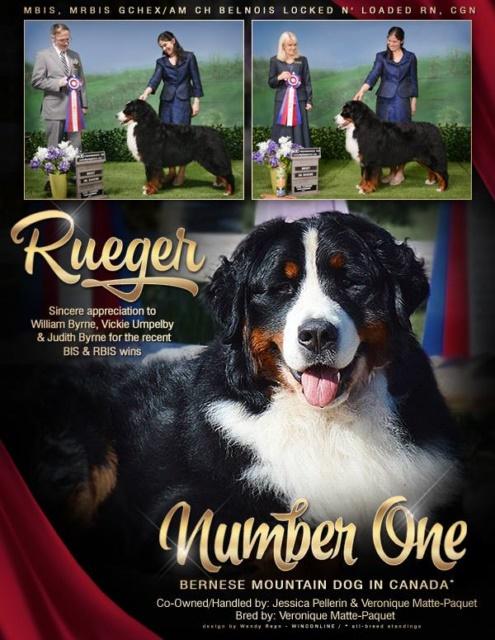 Breeder Bernese Mountain Dogs Puppies | Devoted Breeder Bernese